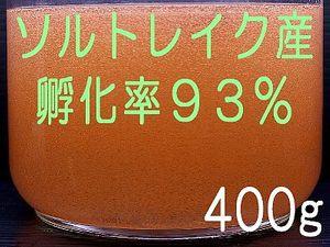 ●ソルトレイク産 極上ブラインシュリンプエッグ 400g  宅配便 送料無料